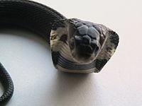 Chinese cobra.jpg