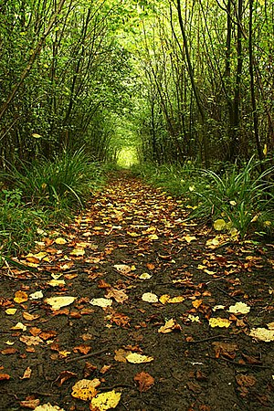 English: Forest Path Following a path through ...