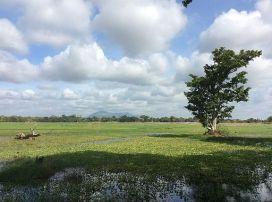 Habarana Jungle