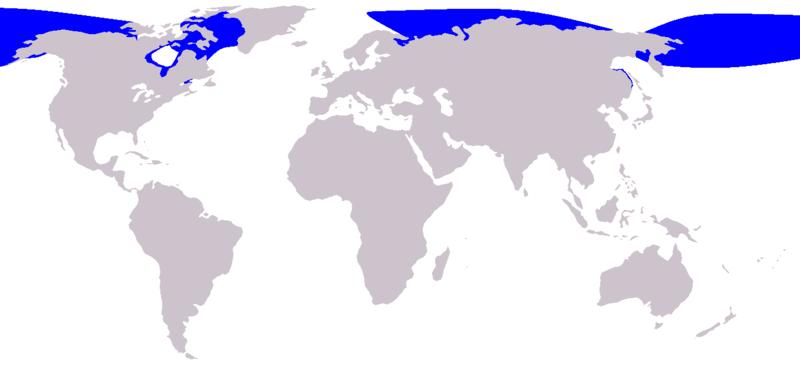 Image:Cetacea range map Beluga.png