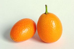 Fruits of the Oval Kumquat, Fortunella japonic...