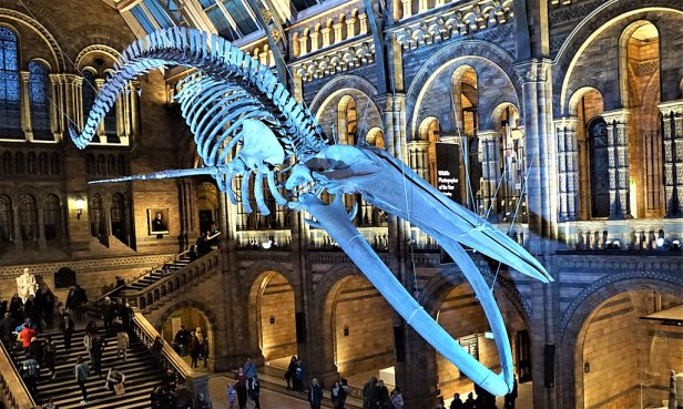 Blue Whale - Natural History Museum, London - Joy of Museums