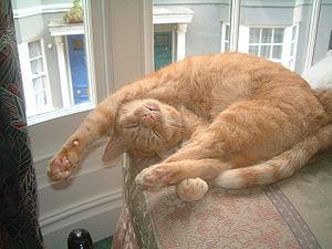 He often sleeps in weird positions looking as ...