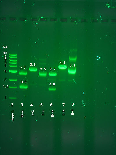 Structural Biochemistry Dna Recombinant Techniques