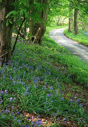 Spring at Stancombe Lane A former green lane, ...