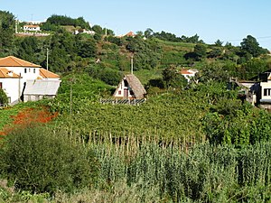 English: wine fields near town Santana, Madeira.