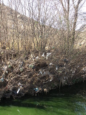 Birds nesting in a tree covered in plastic bag...