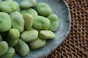 Broad beans, shelled and steamed