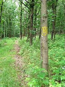 """Das gelbe Wanderzeichen """"N"""" an einem Baum"""