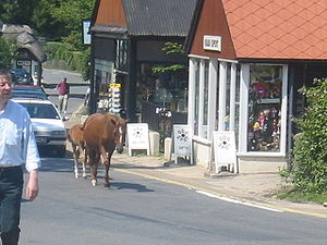 Ponies walking the streets in Burley.