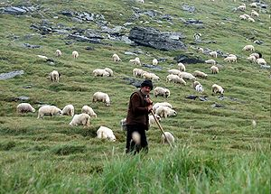 Shepherd in Făgăraş Mountains, Romania