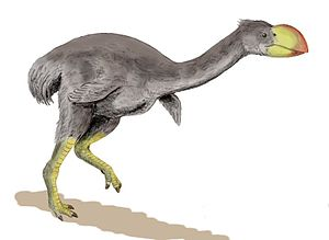 Dromornis stirtoni, a flightless bird from the...