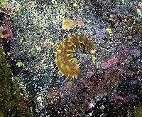 A Sea Cucumber