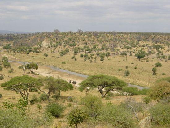 Savann i Tarangire nationalpark, Tanzania