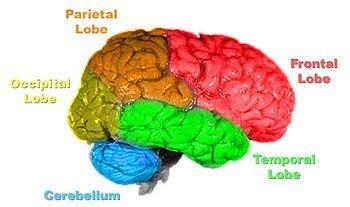 creierul - centrul universului personal