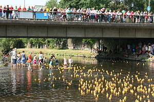 Rubber duck race on the Wupper river in Leichl...