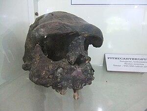 English: Sangiran VIII, Sangiran Museum, Srage...