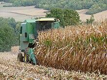Photographie d'une récolte de maïs à Épône, près de Paris.