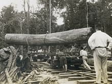 Image of logging in North Borneo in late 19th century