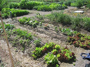 community garden, Colorado becominggreenblog.c...