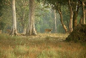 India's best safari spots! (2/3)