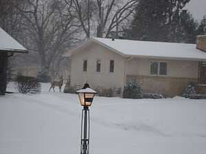 English: A neighborhood in Golden Valley, Minn...