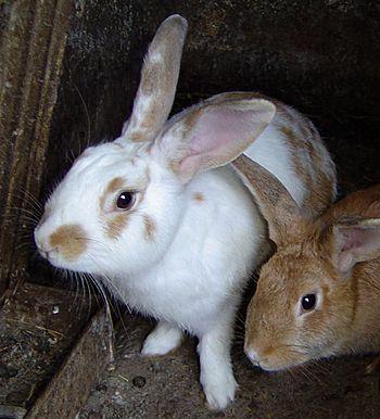 Rabbits DSC00372