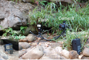 Photo showing camera trap used for photographi...