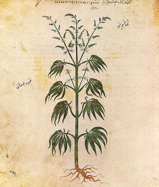 Cannabis or Mary Jane or Marijuana