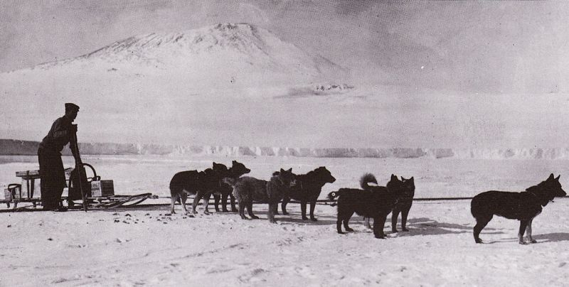 Sled dogs - Terra Nova Expedition