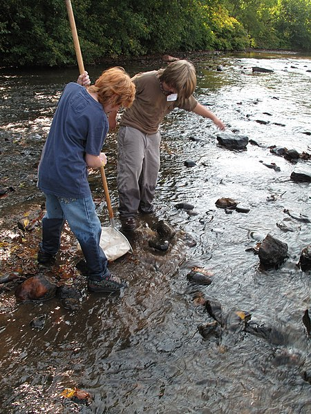 File:Two students collecting aquatic macroinvertebrates (5029713328).jpg