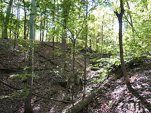 English: Griffy Woods, one of the properties o...