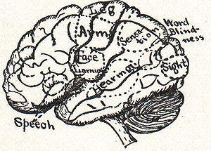 NSRW Brain 2