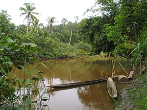 A river on Siberut island in Indonesia.