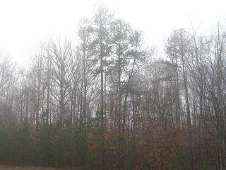 https://i2.wp.com/upload.wikimedia.org/wikipedia/commons/thumb/6/62/Trees_in_fog.jpg/320px-Trees_in_fog.jpg