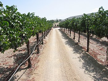 Temecula vineyard in California