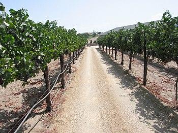 Temecula vineyard in California
