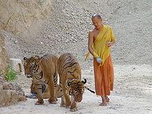 Tiger Temple (Wat Phra Luang Ta Bua)