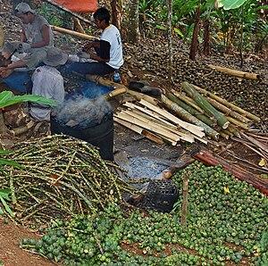 English: Collecting and boiling Arenga pinnata...