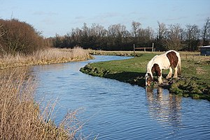 English: Horse drinking at Quy Water The relat...