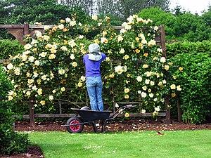 English: The Rose Garden at Drum Castle A gard...
