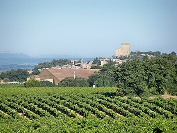 English: Vineyard in Chateauneuf du Pape, Vauc...
