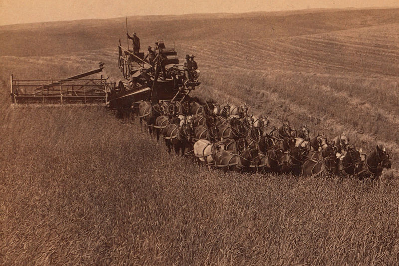 File:Combine harvester pulled by 33 horses, Walla Walla, ca. 1902.jpg