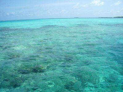 Arrecife – Wikipédia, a enciclopédia livre