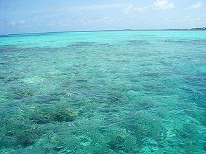 Maldive reefs