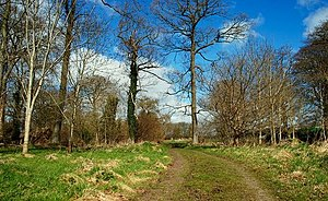 Spring at Clandeboye (1) This section of woodl...