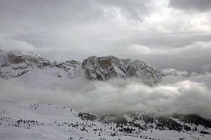 English: Snow on Stevia in Val Gardena