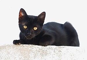 English: A black kitten at full sun against a ...