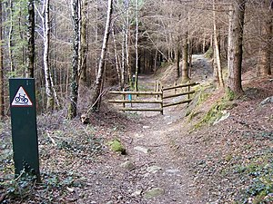 English: Crossing of paths, Gwydyr Forest The ...