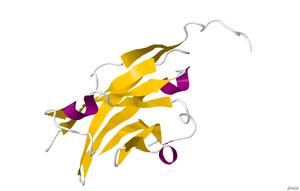 myelin oligodendrocyte glycoprotein